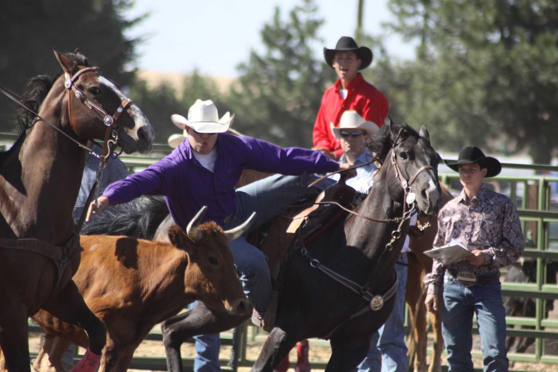 Rodeo Bulldogging